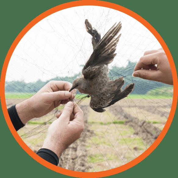 Bird Control Experts