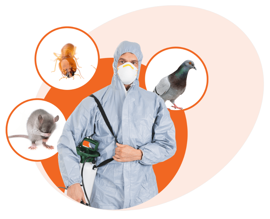 Photo of Pest Control Services