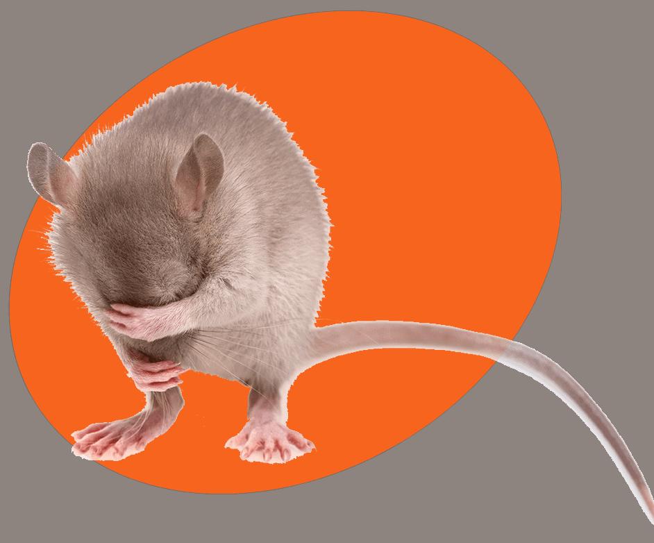 Rat Control Photo