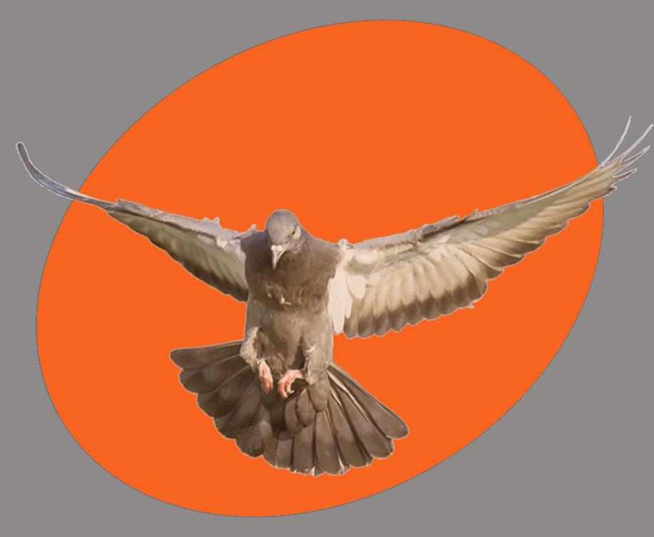 Bird Control Services Photo
